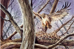 104 - Ferruginous Hawk, Mealtime Watercolor SOLD