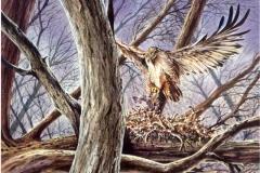 104 - Ferruginous Hawk, Mealtime Watercolor SOLD