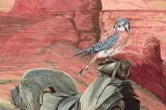 105 - Arizona Kestrel Acrylic on gesso panel $600