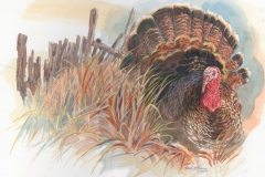 138 - Wild Turkey SOLD