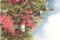 126 - Flowering Red Currant Hummers