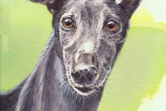 252 - Grayhound portrait 2 commission