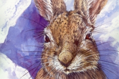 214 - Snowshoe Hare SOLD