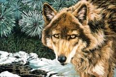 216 - Winter Wolf $150