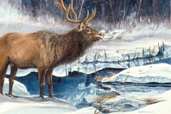 229 - Elk Blowing Cold SOLD