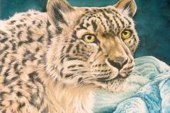 234 - Snow Leopard $150.