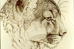 242 - Cougar line drawing