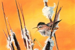 121 - Calling The Sun, Marsh Wren SOLD