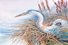 127 - Heron Breaking Cover $350