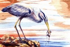 133 - Beach Combing Heron $300