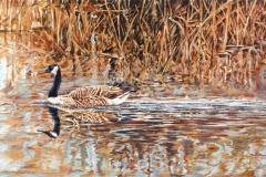 154 - Paddling on Theler Pond $700
