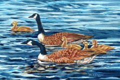 178 - Stay Close, Canadian Geese