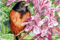 119 - Spring Robin Watercolor SOLD