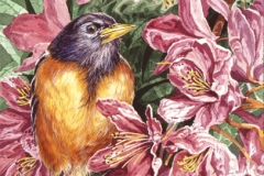120 - Spring Robin 2 SOLD