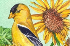 163 - American Goldfinch w sunflower SOLD