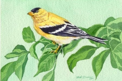 164 - American Goldfinch SOLD
