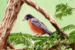176 - Robin watercolor in tree SOLD