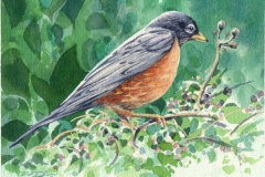 177 - Spring Robin 2 SOLD